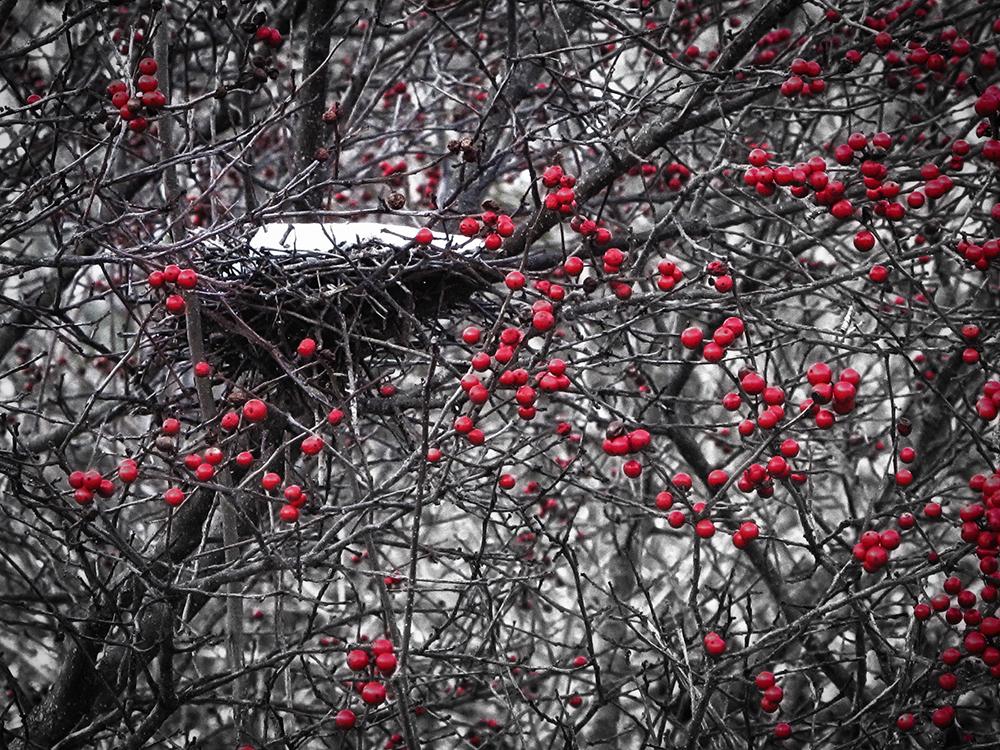 Nest 2 for blog