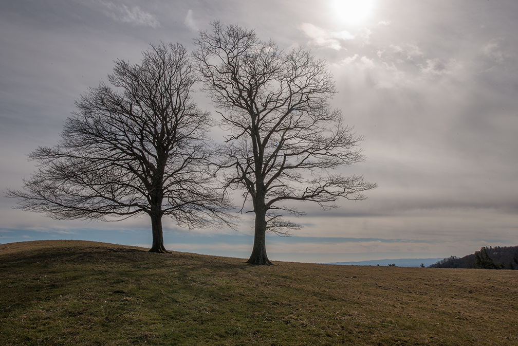 Blog Merging Trees