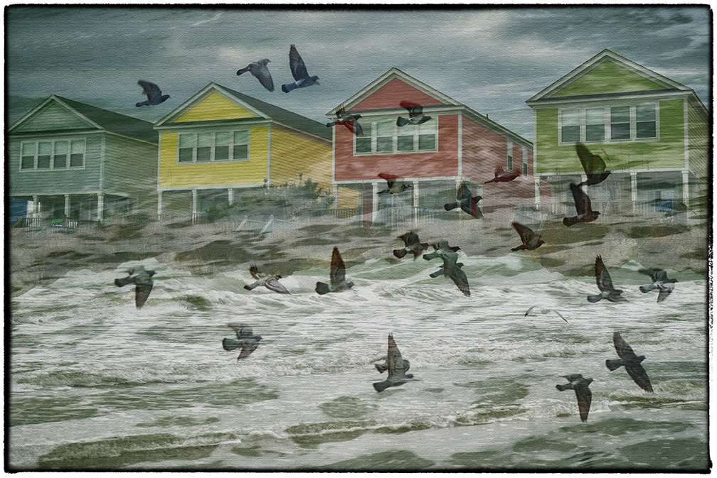 Blog Ocean Waves, Houses and Birds