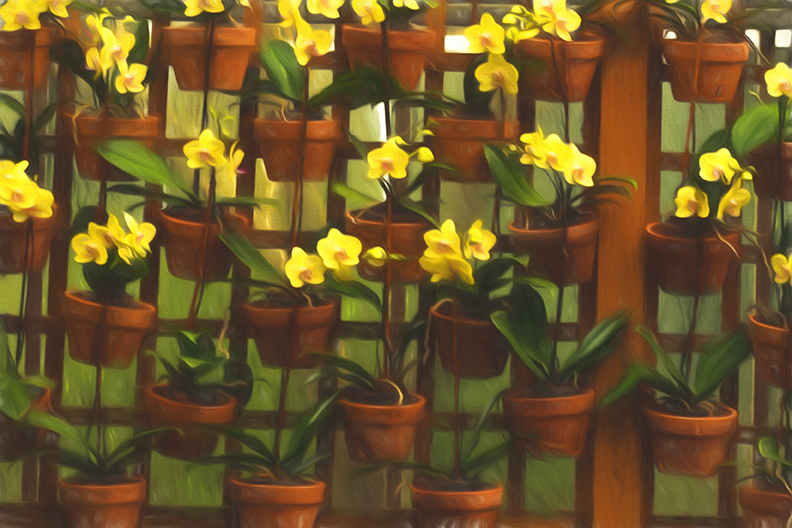 Atlanta plants Topaz for blog
