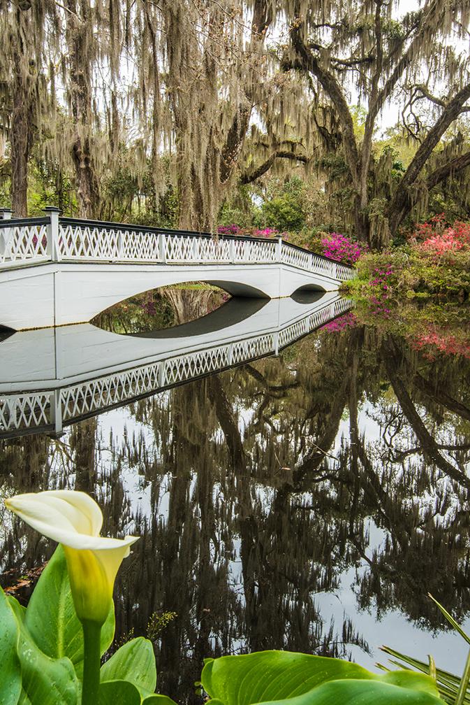 Bridge and Flower for blog