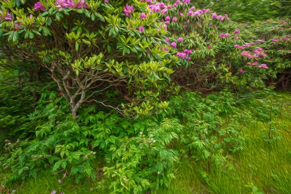 Chasing Rhododendron at Roan Mountain State Park Part One