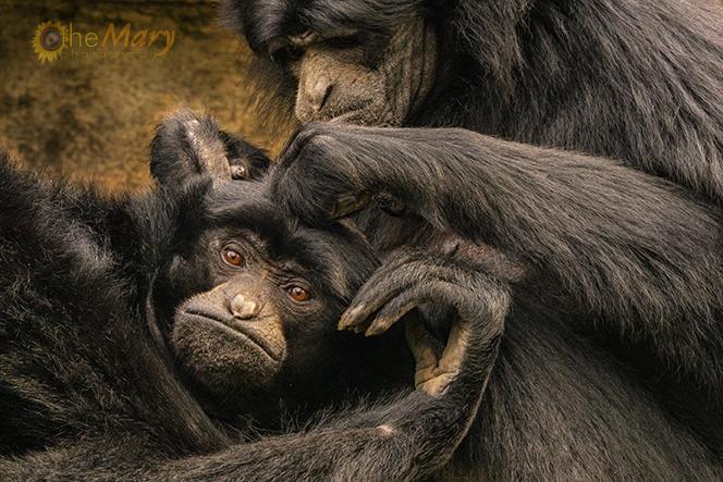 monkey-see-monkey-do-for-fb