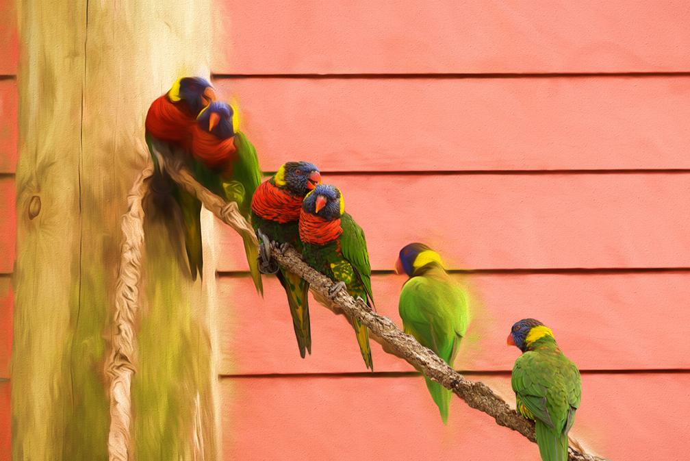 three-parrots-filteredfor-fb