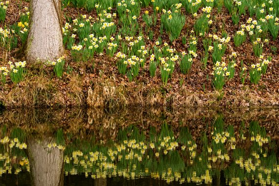 Gibbs Garden in Spring