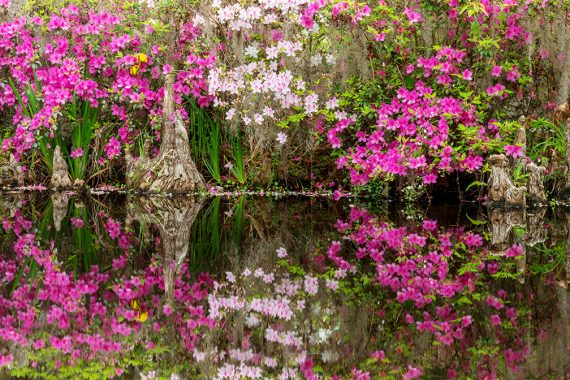 Reflections of Magnolia
