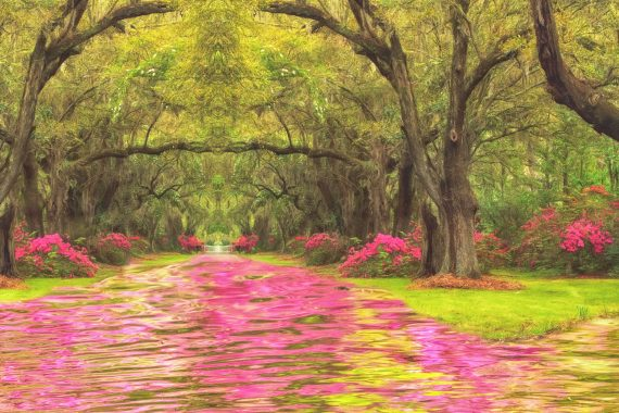 Week Thirteen Composite: Avenue of Oaks and Azaleas