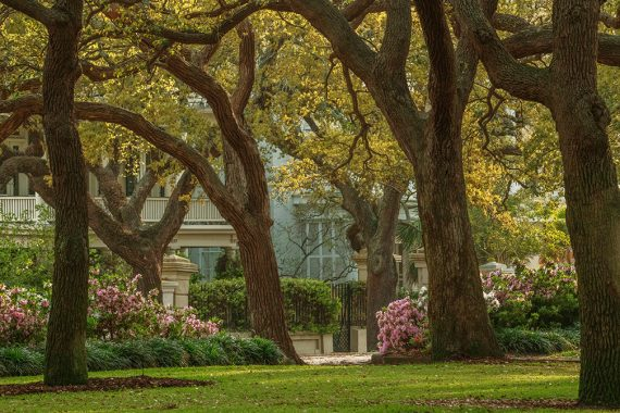 Photographing in Downtown Charleston